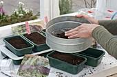 Vegetable growing in heatable sowing bowls