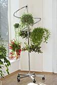 Mobile coat rack as a hanging baskets holder