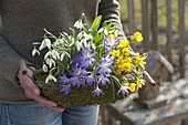Woman carrying Crocus, Eranthis and Galanthus nivalis
