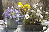 Crocus, Anemone blanda 'White Splendor'