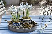 Iris reticulata 'Katherine Hodgkin' in Polish pottery