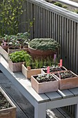 In milder weather vegetables may be used to harden young plants
