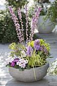 Bowl with Daphne mezereum, Primula x pruhoniciana 'Wanda'