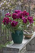 Lush bouquet of Paeonia suffruticosa (shrub peonies)