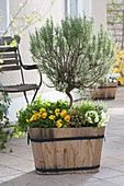 Wooden tub with herbs and edible flowers, rosemary
