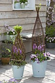 Living willow objects, artfully woven as decoration