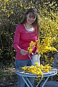 Cutting forsythia branches and stick bouquet