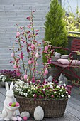 Old laundry basket planted with spring bloomers