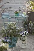 Spring balcony with blooming rosemary and viola cornuta