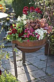 Fire bowl planted with spring bloomers