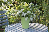 Bouquet of flowering branches, Prunus padus, Ribes