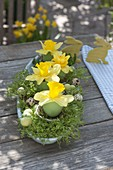 Oblong cup of cress, single Narcissus flowers