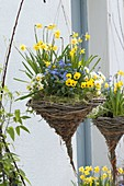 Hanging basket made from different branches