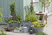 Old zinc sinks as mini ponds on the terrace