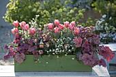 Green wooden box with Tulipa 'Princess Irene', Heuchera 'Berry'