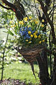 Homemade flower basket from willow to tree