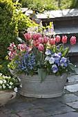 Zinc tub with Tulipa 'Princess Irene', Viola wittrockiana