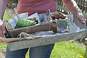 Woman holding zinc box with attachment for sowing in vegetable garden