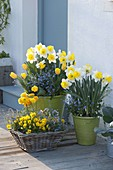 Spring blooms in pots and basket at the entrance to Narcissus 'Goblet'