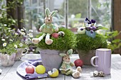 Pots with Sagina as easter-eggs with fabric easter bunny