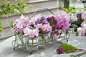 Bottle carrier with Rhododendron (Alpine rose) inflorescences