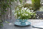 Small blooming woodruff (Galium odoratum) bouquet