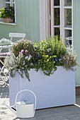 Pastel lilac box with rosemary, thyme