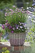 Korb mit bluehendem Schnittlauch (Allium schoenoprasum) und Viola cornuta