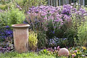 Autumn bed with aster, Molinia arundinacea 'Karl Foerster'