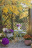 Small seating place under celastrus in yellow autumn color