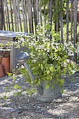 May green, bouquet of twigs of betula (birch) and prunus