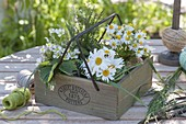 Wooden box with mini bouquet, leucanthemum, chamomile