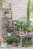 Terrace with herbs and vegetables