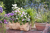 Woodchip basket with chives 'Corsican White', Tourenia