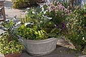 Zinc tub with salad 'Trout' right, 'Till' center and Salanova
