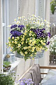 Zinc tub as hanging planter with Calibrachoa