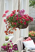 Wicker basket planted as a flower basket with Nemesia, Pelargonium