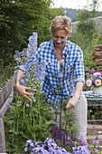 Support delphinium with perennial holder