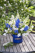 Blue-white bouquet of Lupinus 'Miss', Delphinium