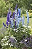Blue and white perennial border, Delphinium (Larkspur)