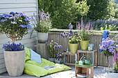 Blue balcony with beanbag, Hydrangea 'blue tit'