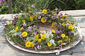 Wreath with Galega (Geissraute), Anthemis (Dyer's Chamomile