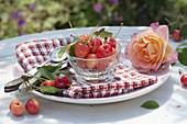 Freshly picked sweet cherries, cartilage cherries 'Great Princess'