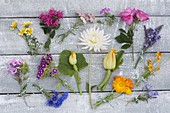 Tableau with edible flowers of perennials, garden flowers and vegetables