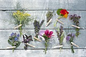 Tableau with edible flowers of herbs