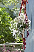 Hanging macrame basket made of colorful ribbons with Diascia Breeze 'Pastel'