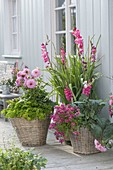 Green wooden bucket with pink gladiolus, Nemesia 'Cassis'