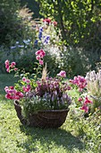 Planted wicker basket in grass-roses, Veronica spicata 'Inspire Pink'