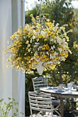 Hanging basket with white and yellow Nemesia Sunsatia 'Little Banana' 'Little Coco'