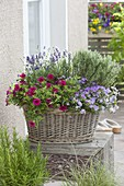 Basket with thyme, lavender, calibrachoa